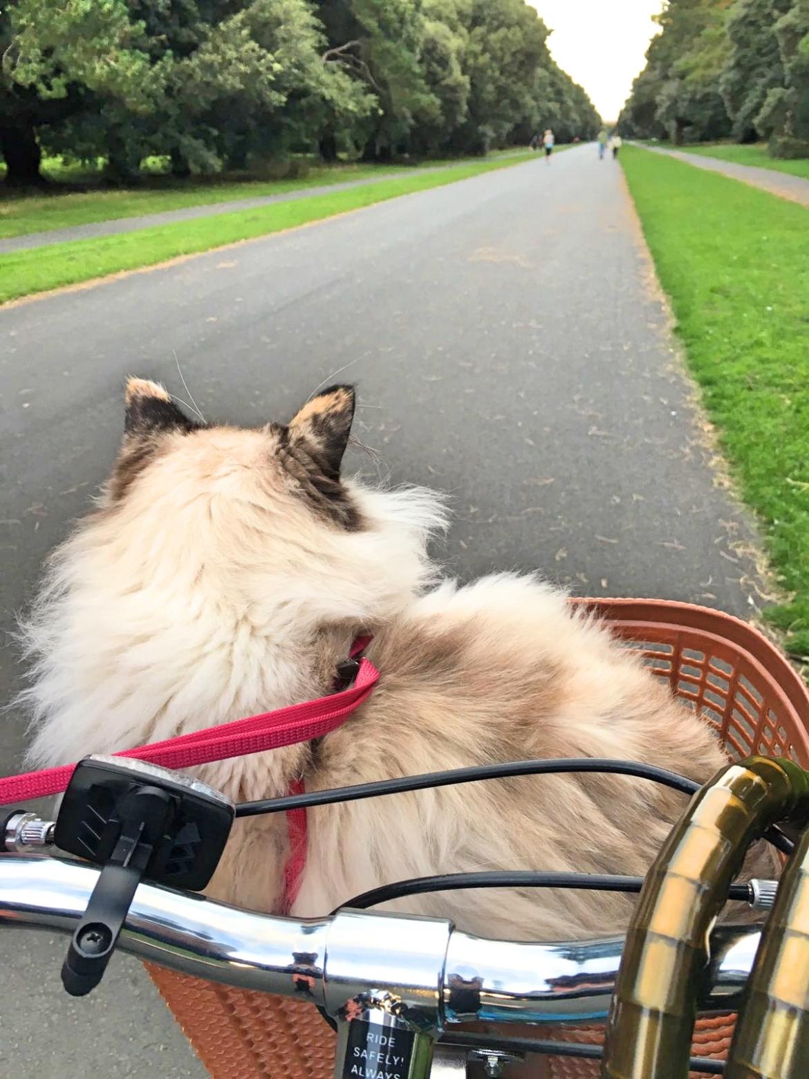 lanas-ride